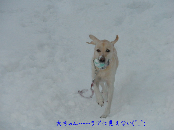 dai_20121214220959.jpg