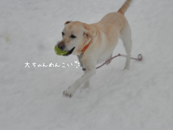 dai_20121216211803.jpg