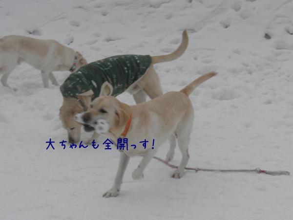 dai_20130112195945.jpg