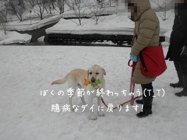 dai_20130318212707.jpg