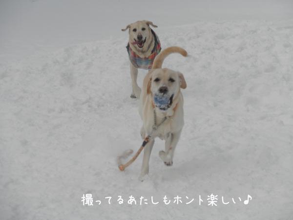 daimaru2_20130114211454.jpg