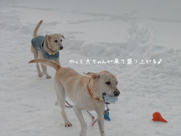 daimaru_20121222001415.jpg