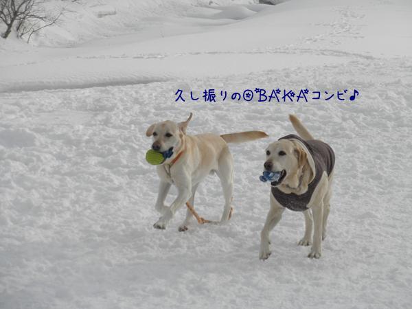 daimaru_20130305234136.jpg