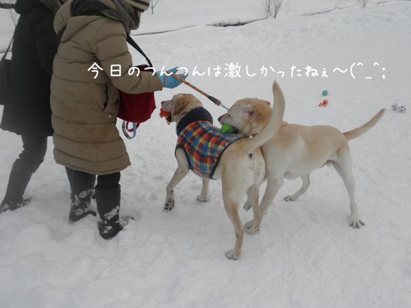 daituntun_20130124212829.jpg