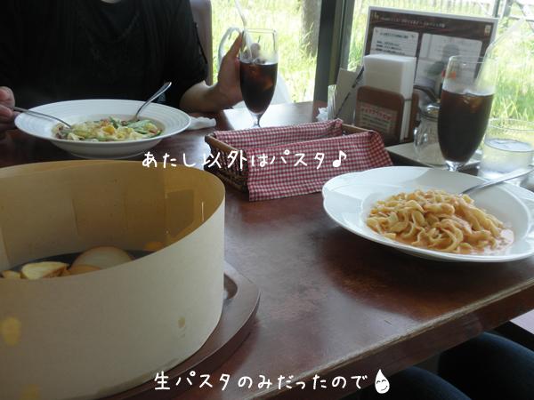 ekorin2.jpg