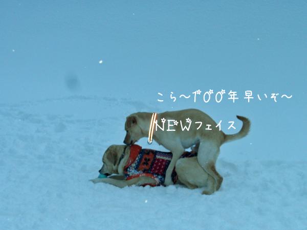 f_20130130174645.jpg