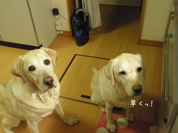 gohan1_20121230224345.jpg