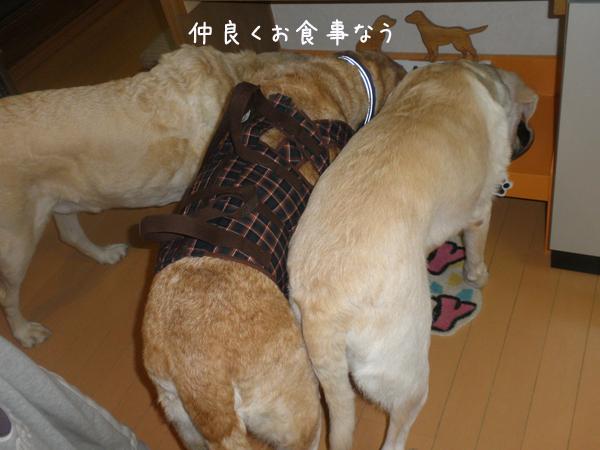 gohan1_20130112195952.jpg
