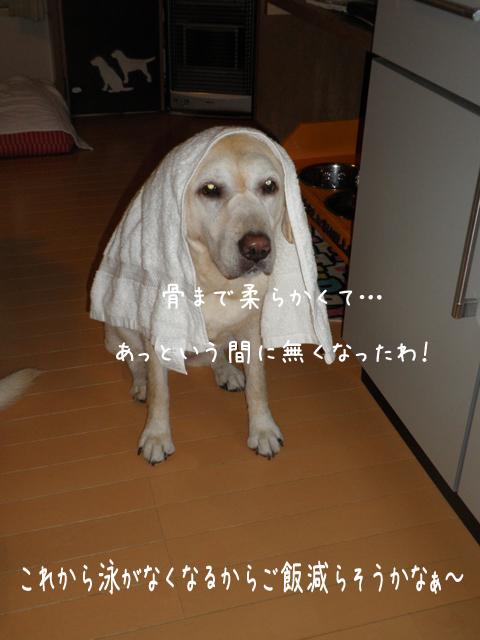 gohan2_20120915201540.jpg