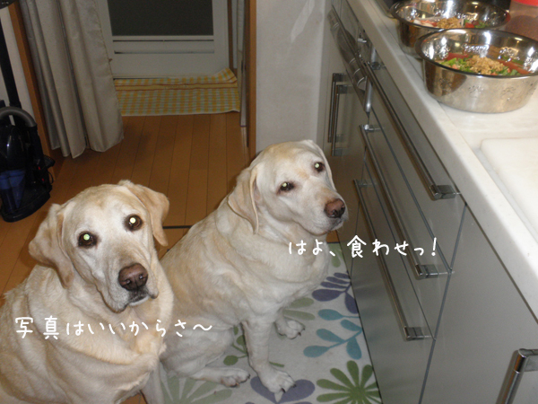 gohan2_20121211200137.jpg
