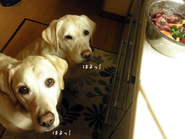 gohan2_20121223215557.jpg