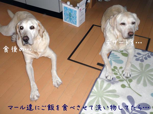 gohan_20121202200231.jpg