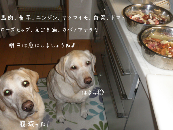 gohan_20121209213600.jpg