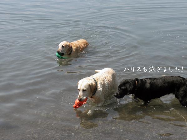 harisu_20120628223530.jpg