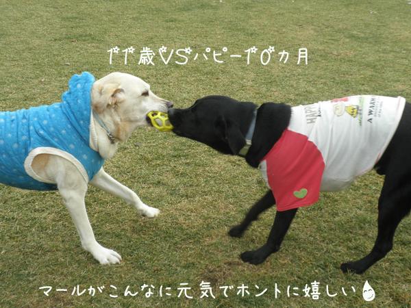 harisumaru4.jpg