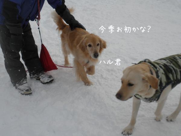 haru_20130210201226.jpg