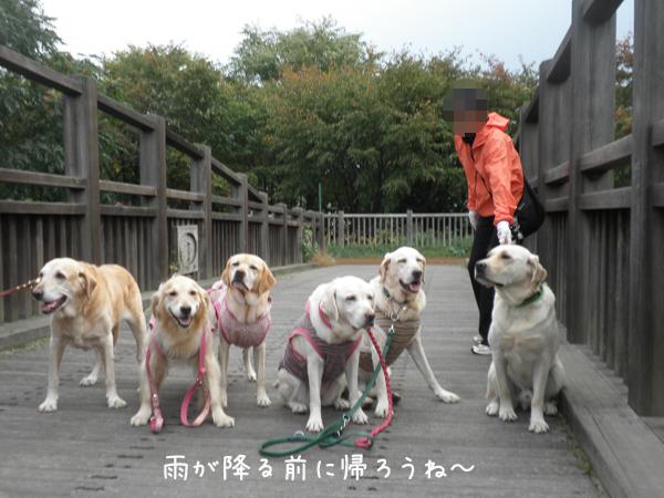 hasi_20121014211947.jpg
