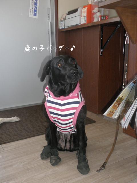 hihumikanoko.jpg
