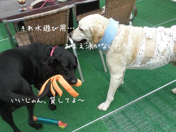 hihumimaru_20120724184037.jpg