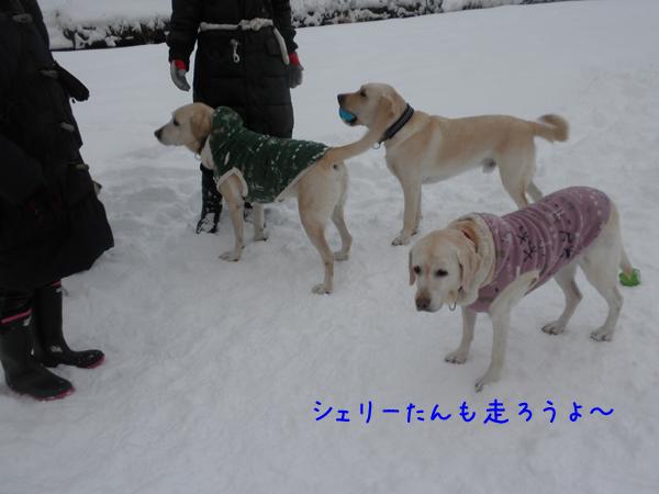 hiroba1_20121212191534.jpg