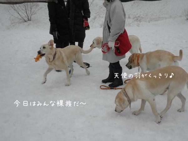 hiroba1_20130308204031.jpg
