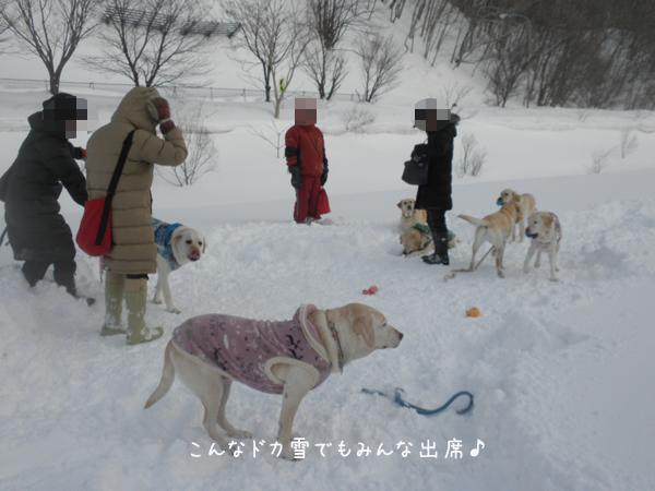 hiroba1_20130309224337.jpg