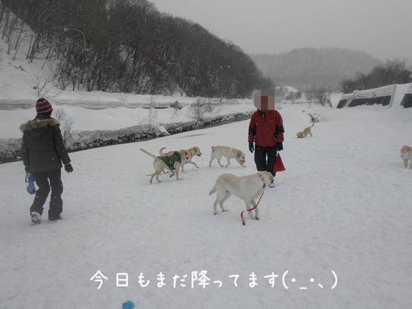 hiroba1_20130316212656.jpg