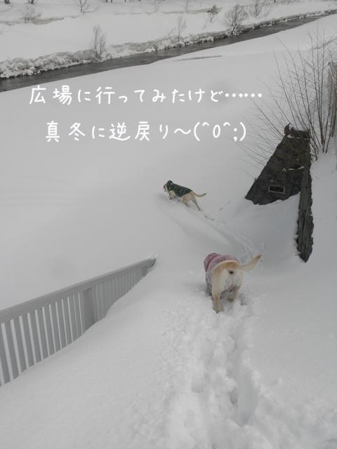 hiroba1_20130321214609.jpg