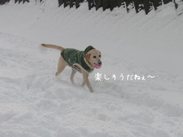 hiroba2_20121202200050.jpg