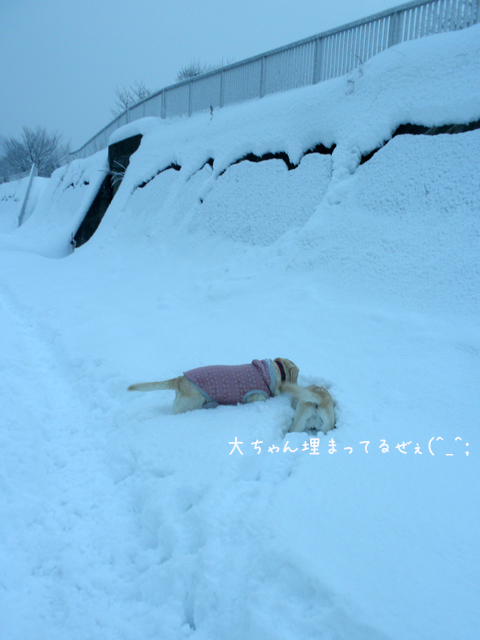 hiroba2_20121214220113.jpg