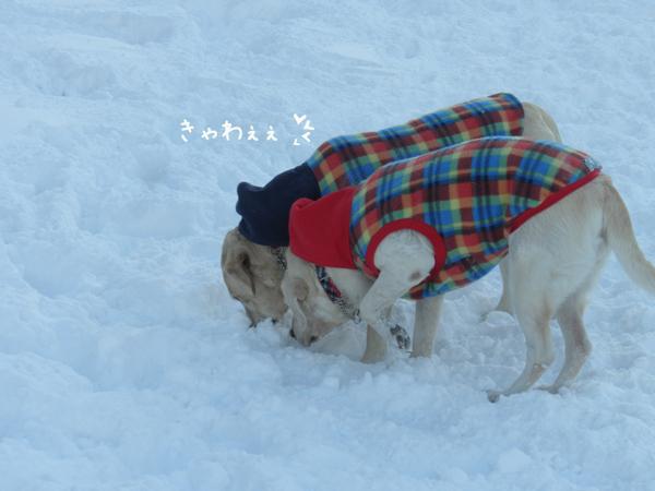 hiroba2_20121226220425.jpg