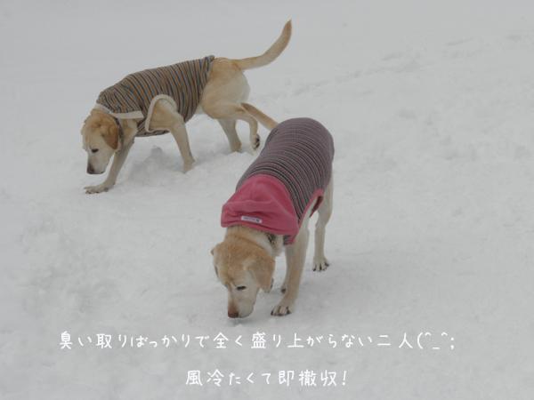 hiroba2_20130227201620.jpg