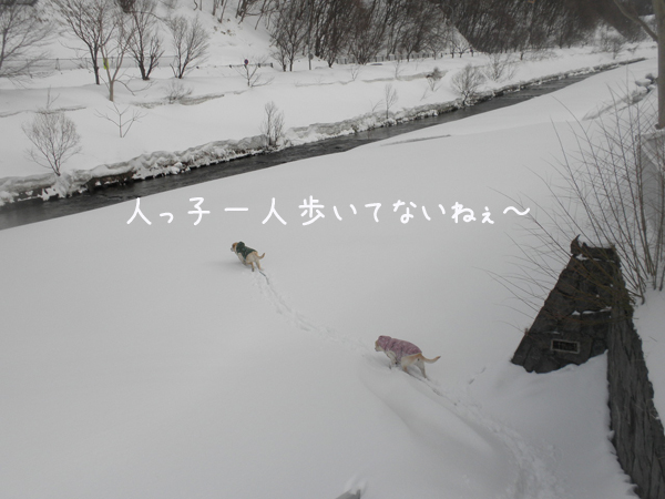 hiroba2_20130321214616.jpg