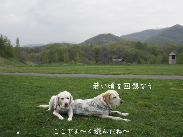hiroba4_20120510000805.jpg