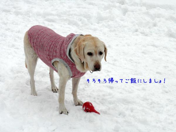 hiroba4_20121214221010.jpg