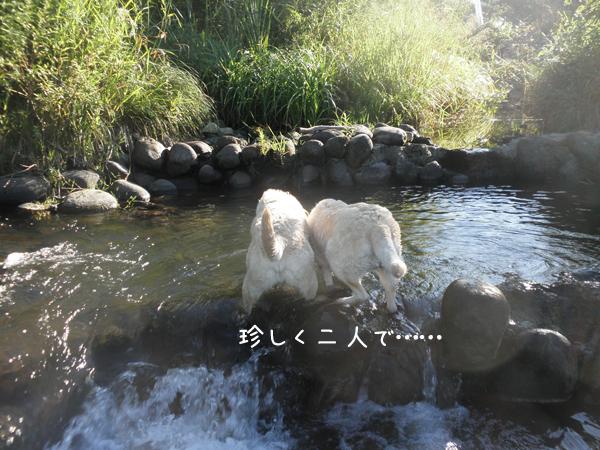 hutari1_20120901205518.jpg