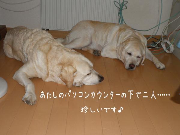 hutari1_20120907204717.jpg