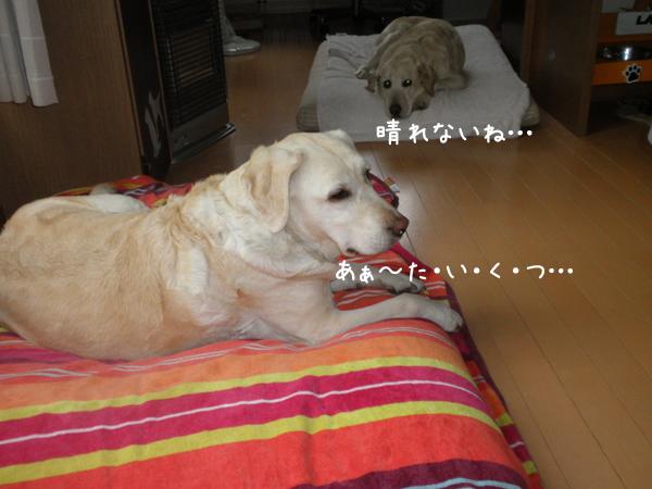 hutari_20120622220036.jpg
