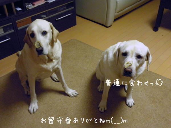 hutari_20120910203630.jpg