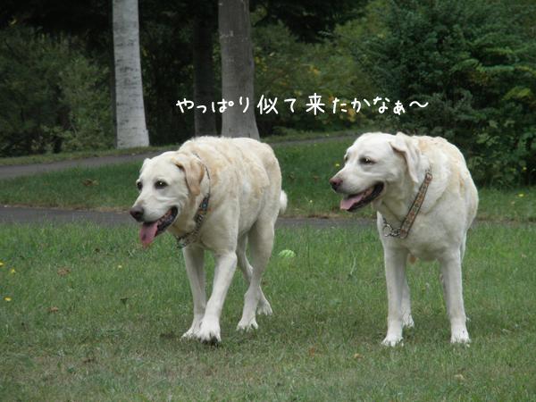iki2_20120906201214.jpg