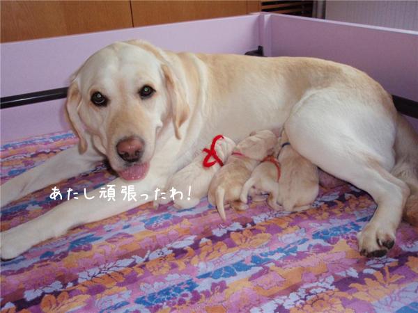 j1_20120703180511.jpg