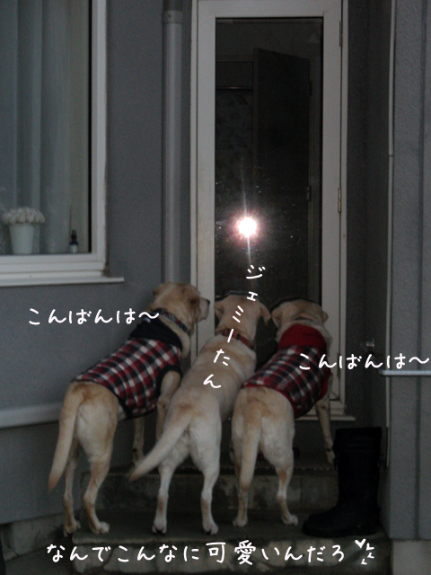 j1_20121115211658.jpg
