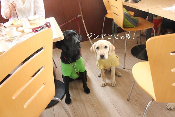 jin1_20120621222302.jpg