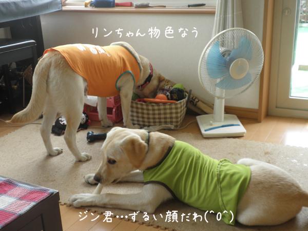 jin_20120810221639.jpg