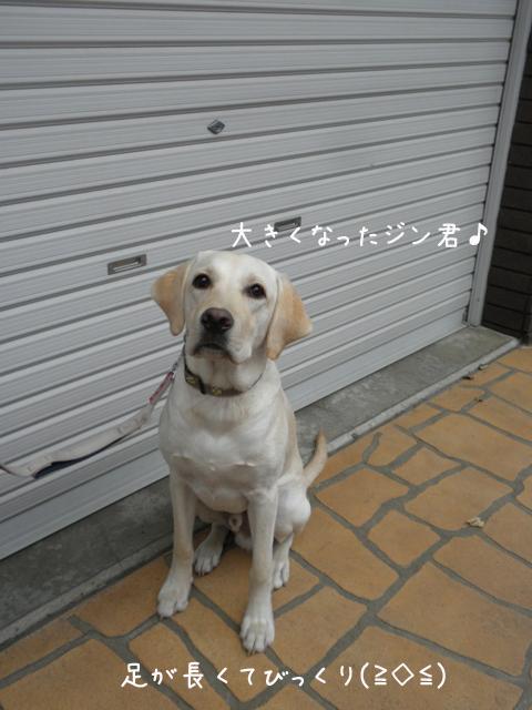 jin_20121022230955.jpg