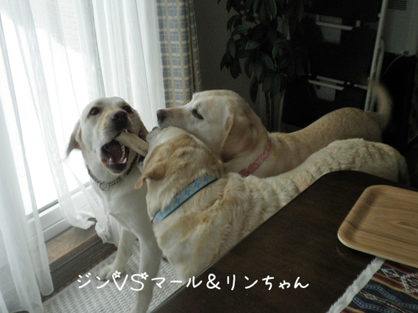 jinmaru_20130322213011.jpg