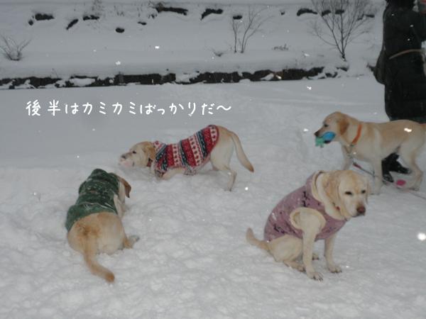 kamikami_20121222195137.jpg