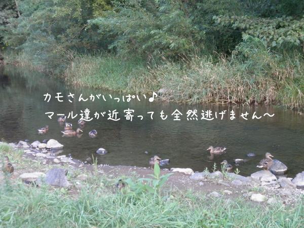 kamo_20120907204715.jpg