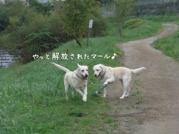 kasenziki1_20121003222858.jpg