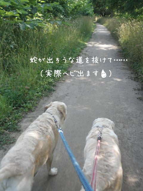 kawa11.jpg